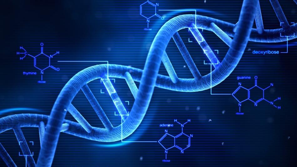 DNA構造